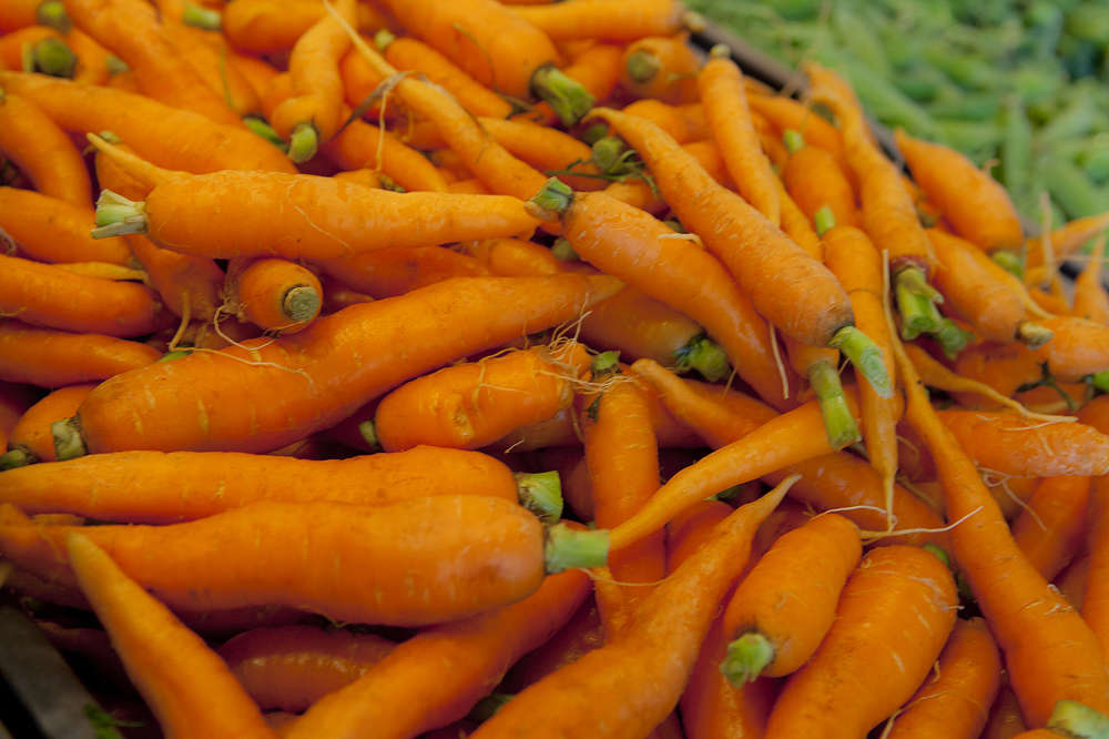 Freshly pulled carrots