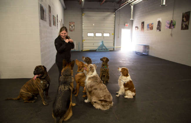 $5 off day of Doggy Daycare!